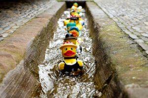 rubber-duck-chorus line