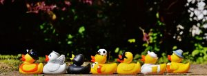 rubber-ducks-1408285__480